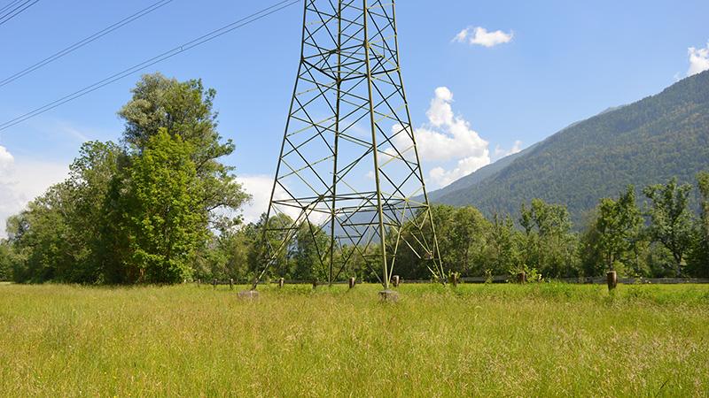 Artenvielfalt unter Strom
