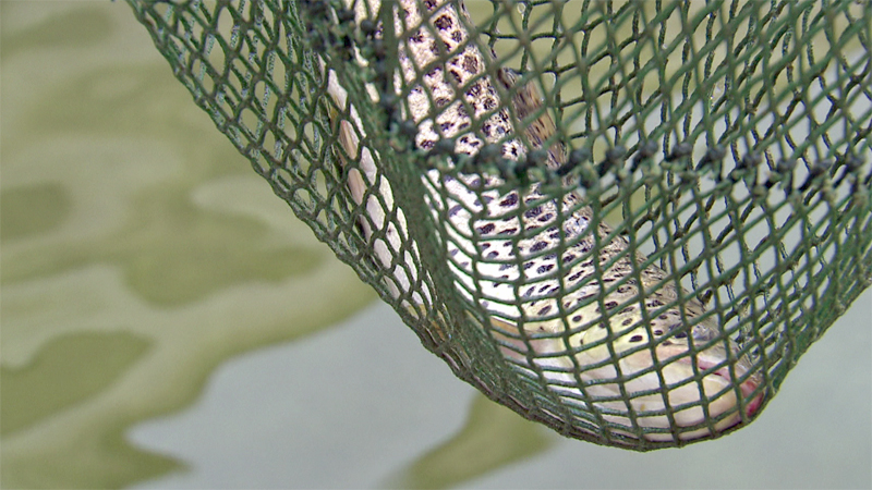 Fischkalter Kremsmünster 9P9S