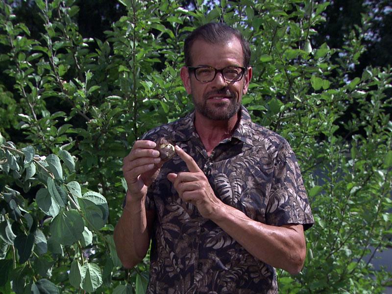 Karl Ploberger mit Blumenzwiebel