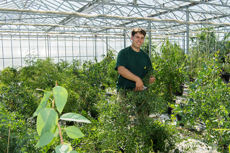 Eukalyptus-Plantage Gärtner Konrad Käfer