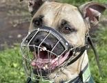 Hund Beißkorb