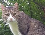 Hauskater Kater Katze Tiersuche
