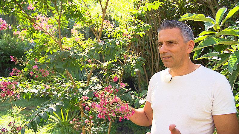 Klimaveränderung Gartenbau