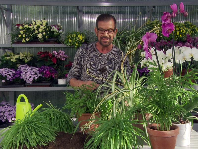 Grüne Pflanzen und Karl Ploberger