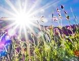 Sonne mit Blumenwiese