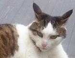 Katze Tiersuche