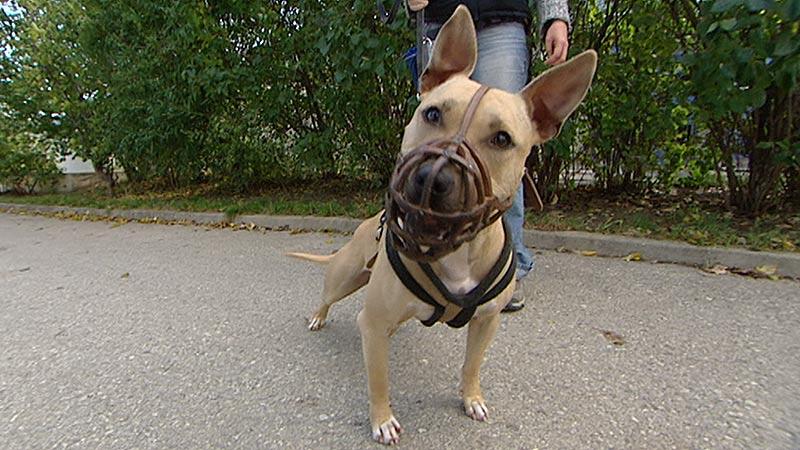 Beißkorbpflicht für Hunde