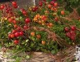 Gut gepflanzt Allerheiligen