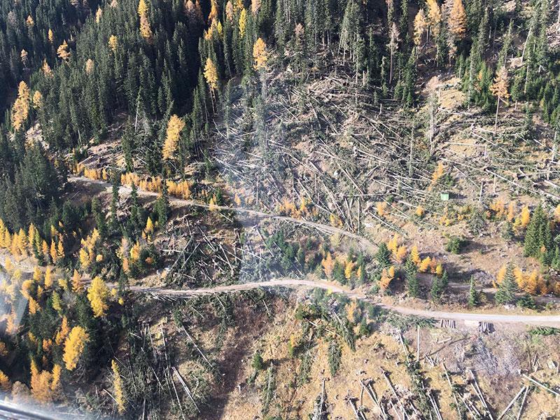 Schäden Forstwirtschaft Mörtschach