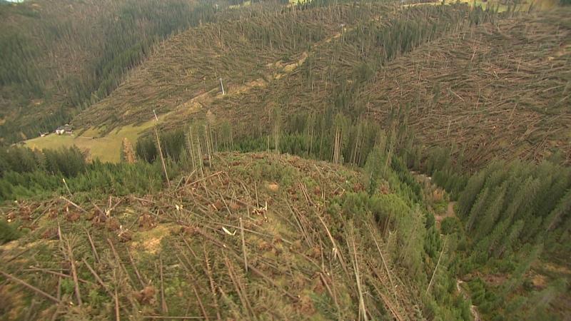zerstörte Wälder, großflächig liegen Baumstämme am Boden