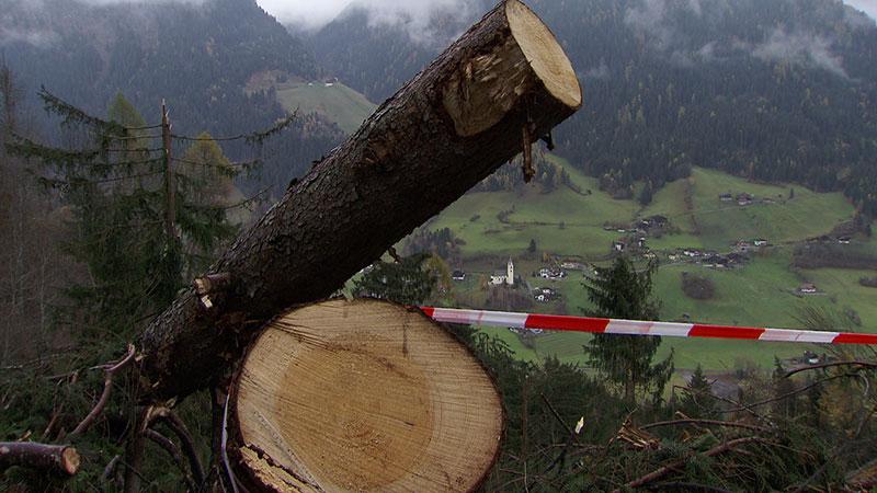 Unwetter Mörtschach Schäden Forstwirtschaft