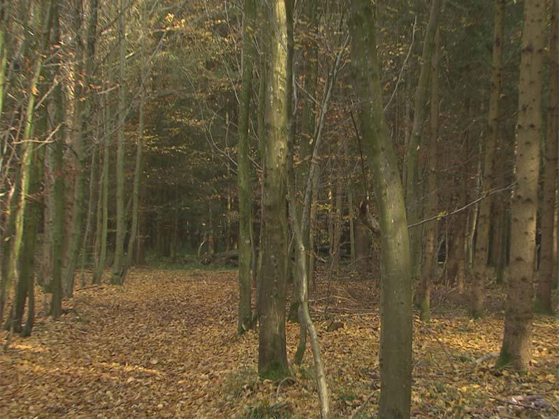 Zwei Tote in Waldlichtung