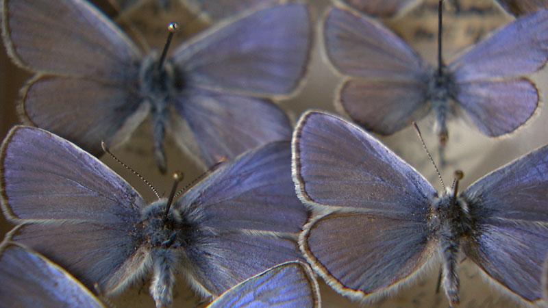 Bundeslandfenster Insektensterben Tagung