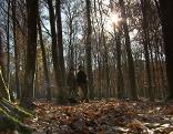 Jägerinnen im Wald