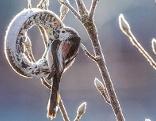 Bundeslandfenster Vögel füttern Winter