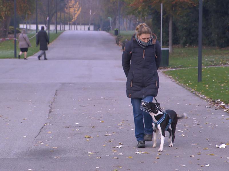 Hundeführschein Prüfung
