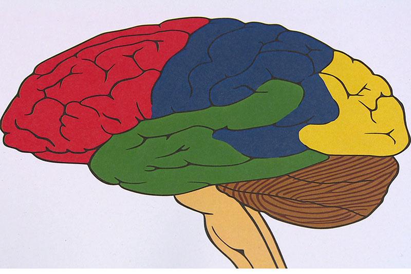 Grafik Gehirnregionen