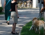 Besitzer mit hunden