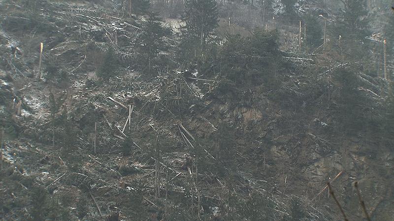 Unwetter Sturm Sägewerk Holz Windbruch