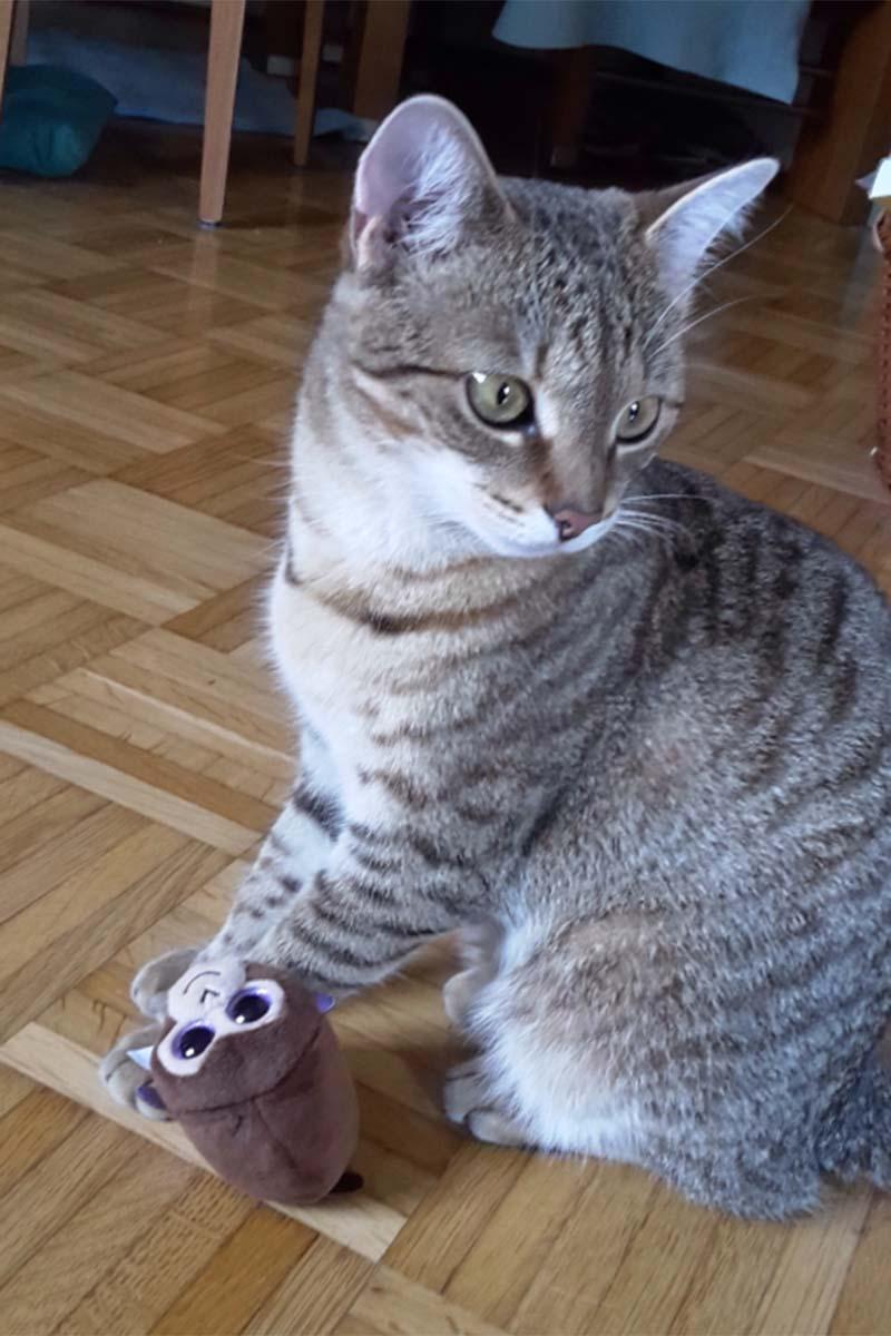 """Katze """"Lilly"""" vermisst"""
