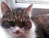 Katze in Hallwang zugelaufen