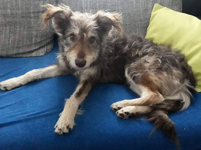 """Hund """"Diesel"""" auf Sofa"""