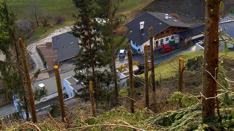 Schaden am Schutzwald in Neustift im Stubaital