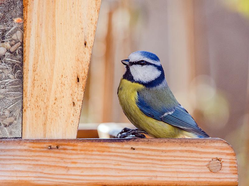 Winter Vogelzählung Birdlife 2019