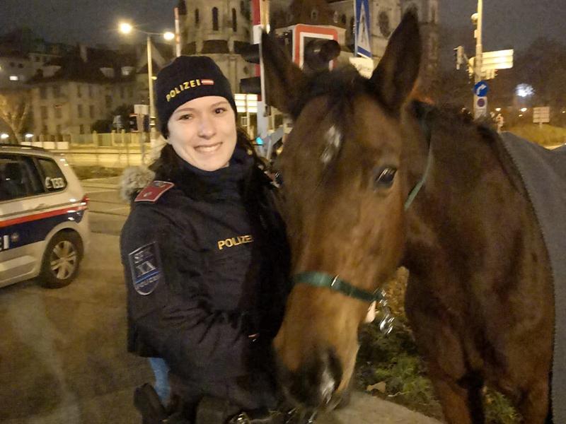 Новости из Вены Pferd2.5839172