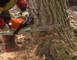 Waldarbeiten - Baum wird gefällt