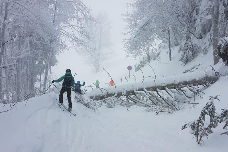 Skitourengeher bei umgestürztem Baum auf dem Gaisberg in der Stadt Salzburg