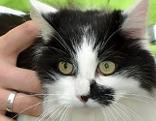 Pannenfahrer befreit Katze aus Motorraum