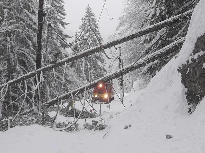 Mariazellerbahn Schnee Sperre Baum
