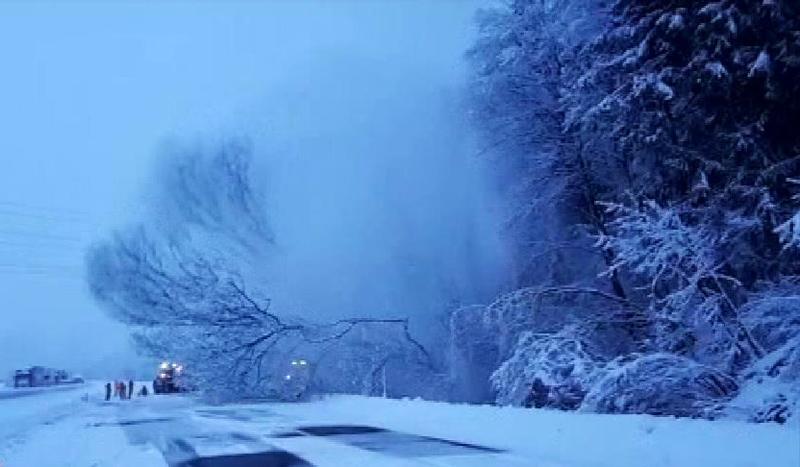 Baum fällt auf Inntalautobahn