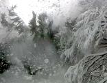 Baum bricht unter Schneelast