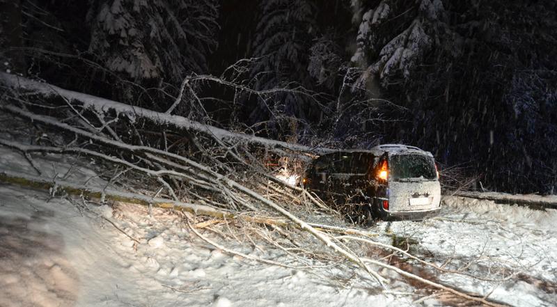 Bäume fallen auf Auto