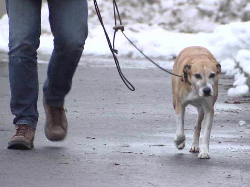 Hundeverordnung in Nenzing
