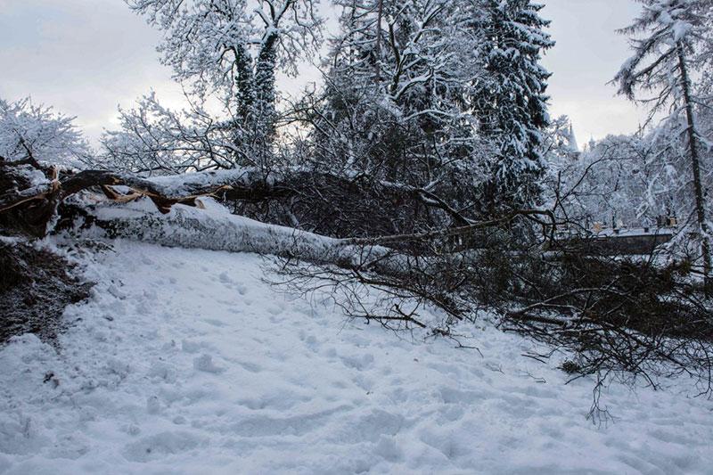 Umgestürzter Baum im Kurgarten der Stadt Salzburg
