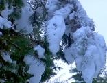 Schnee auf Bäumen