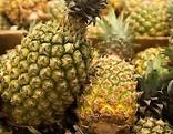 Ananas Guadeloupe
