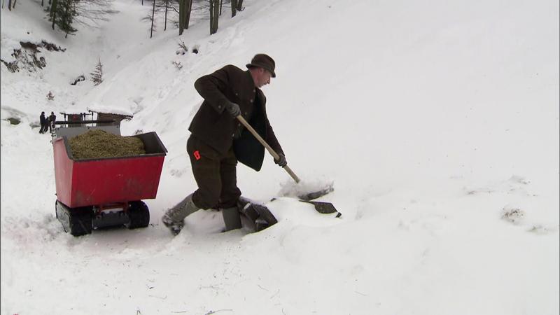 Wildtiere Schnee Jagdverband Bundesforste Nahrungsmangel Kritik