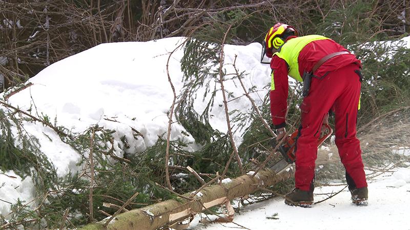 Schnee Schäden Wald