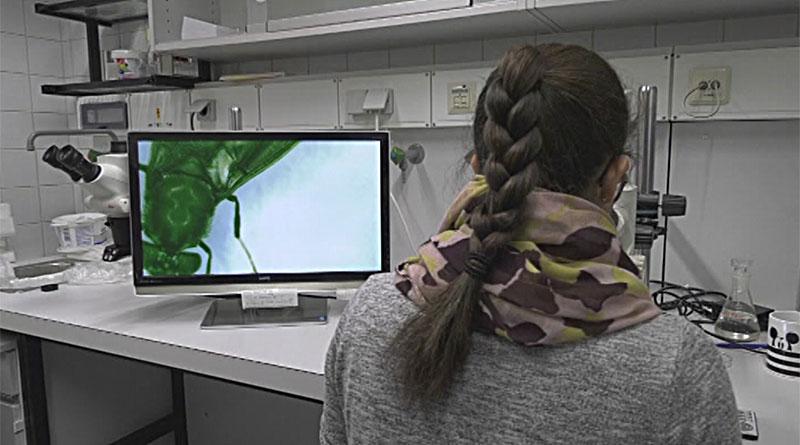 Insektenforschung im Labor