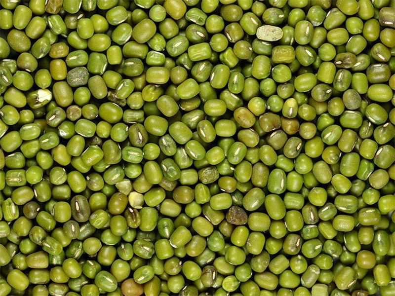 Grüne Mungobohnen