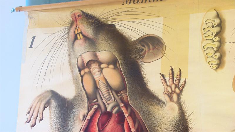 Wandplakat einer Maus