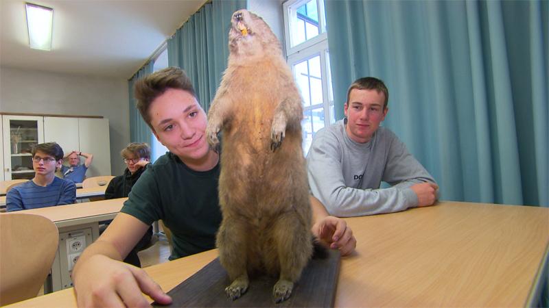 Murmeltier auf Schulbank mit Schülern