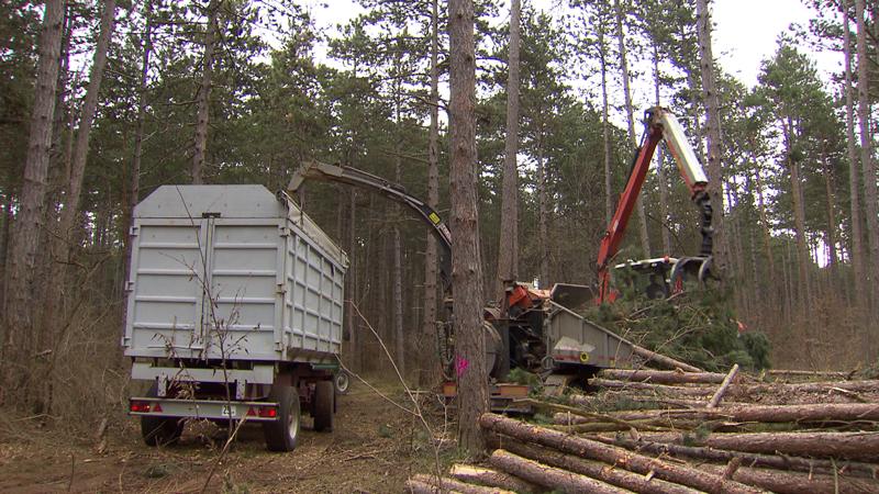 Biomasse Ökostrom Novelle Neues Gesetz