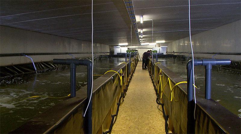 große Halle mit Garnelenbecken