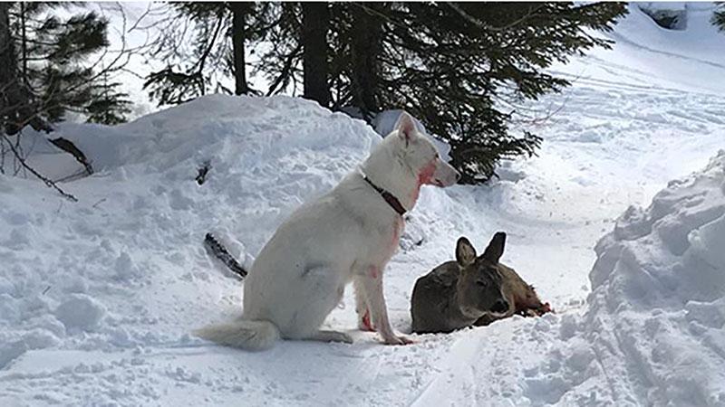 Hund Reh Turrach