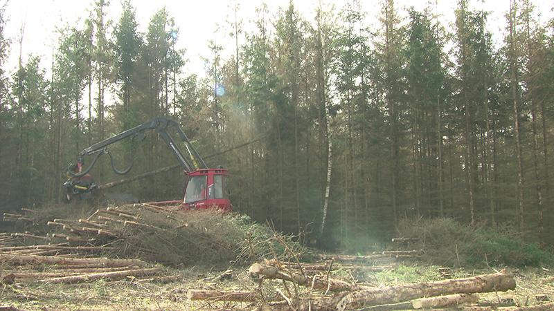 Borkenkäfer Schadholz Waldviertel Krise